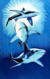 071 sharks