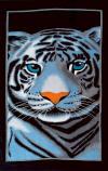 090 tiger